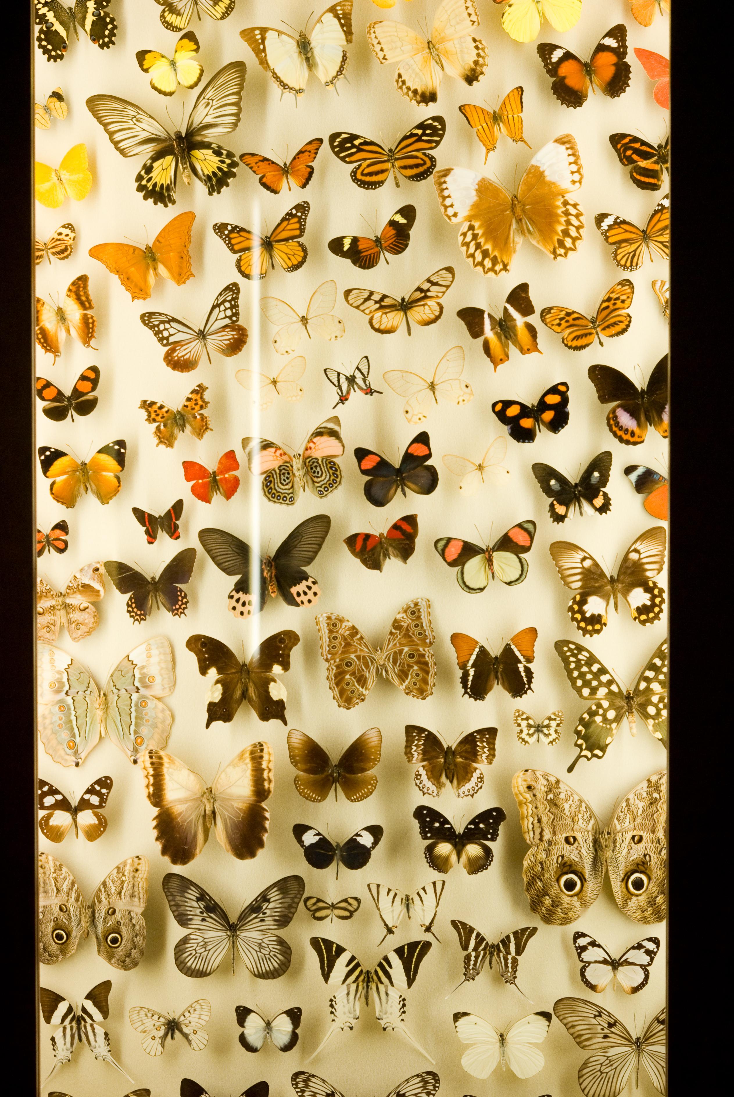 Insectarium   Nervous System blog