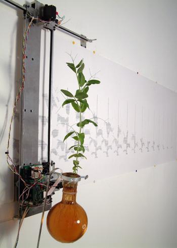 plantside.jpg