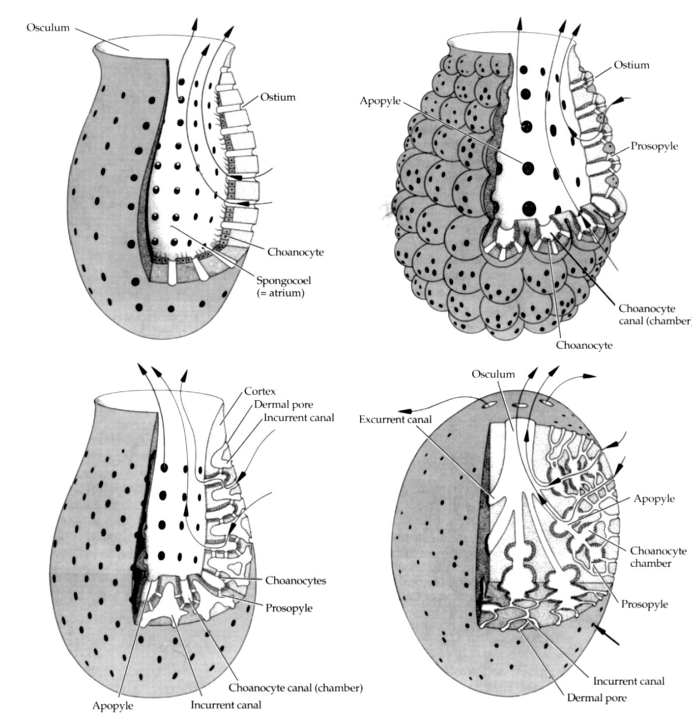 azure vase sponge | Nervous System blog