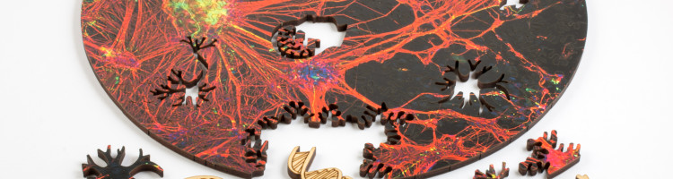 orange neural network puzzle by nervous system