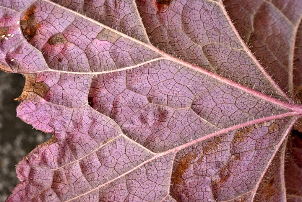03-veins-and-thorns.jpg
