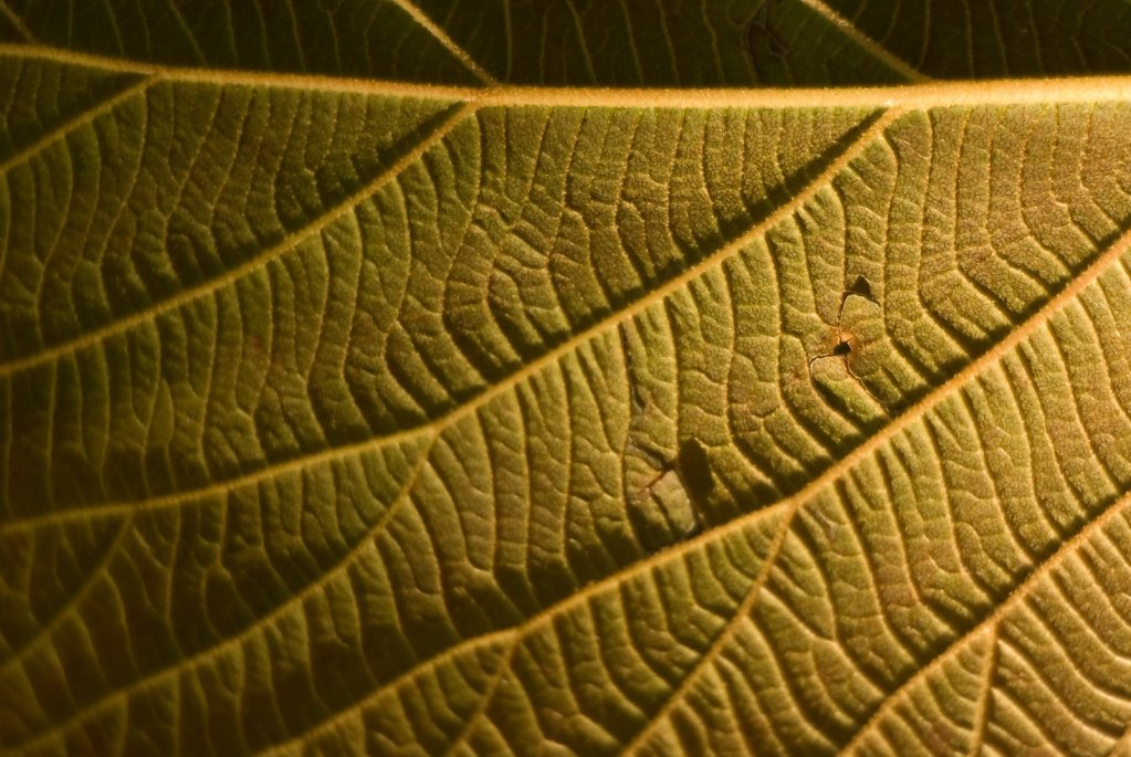 07-the-structure-of-leaves.jpg