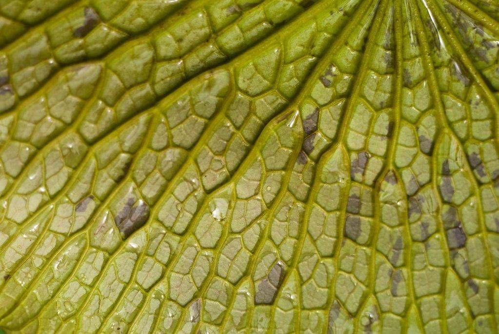 08-underside-of-lily-pad.jpg
