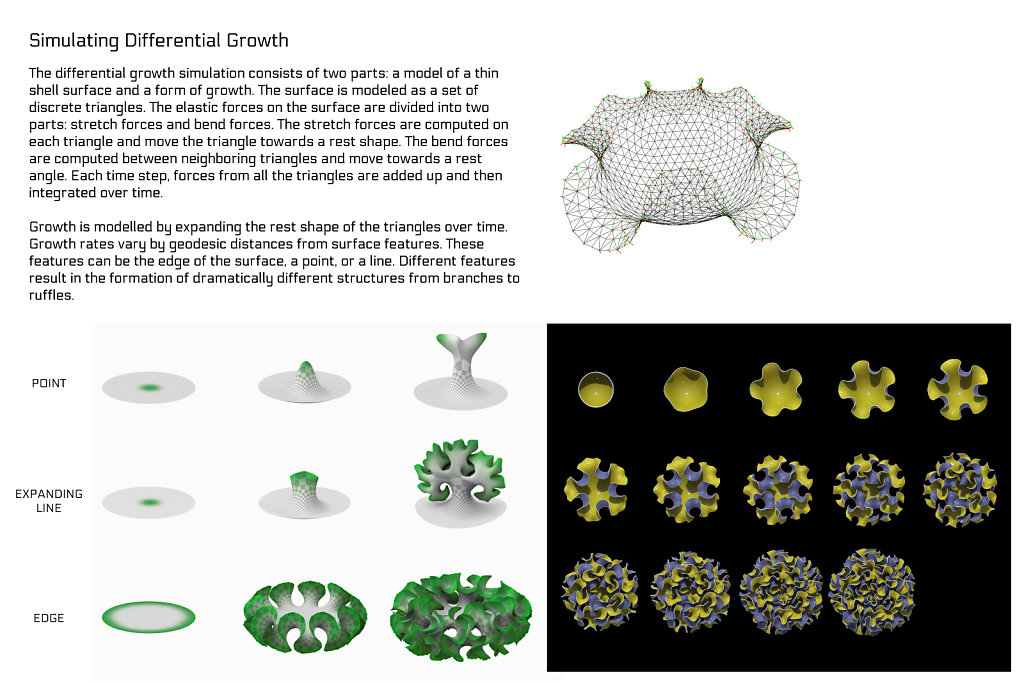 poster: differential growth 2