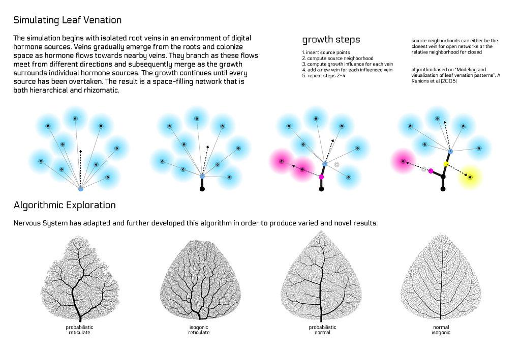 poster: leaf venation 2