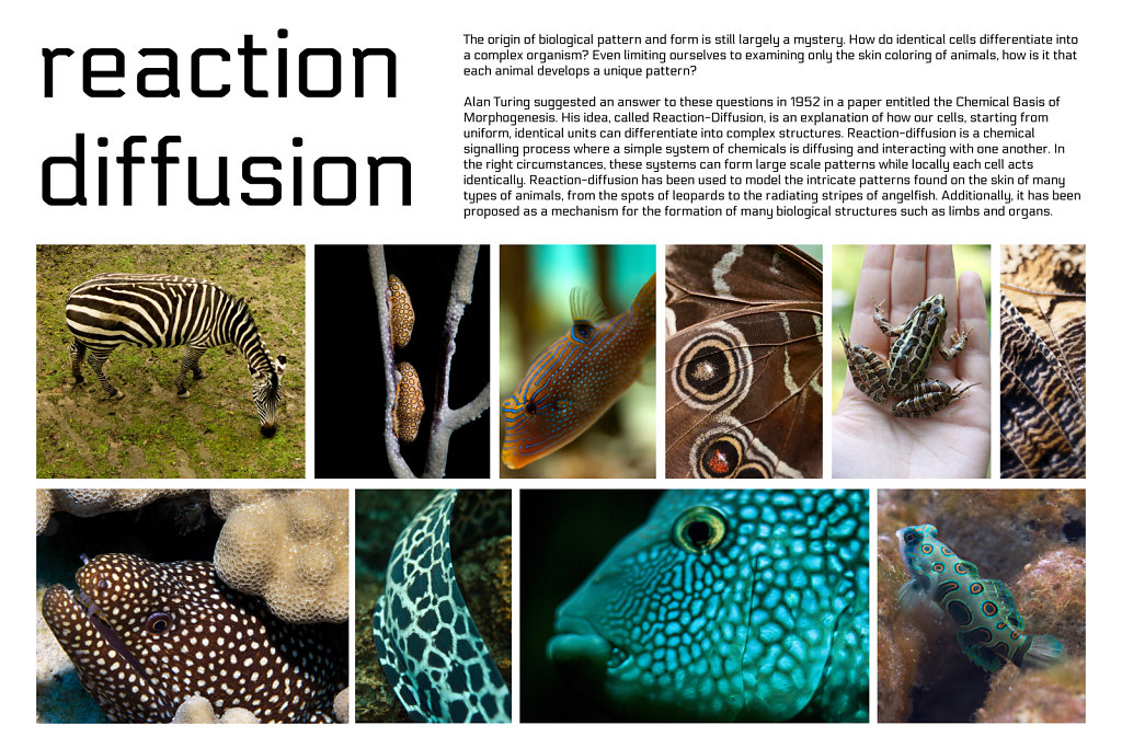poster: reaction-diffusion 1