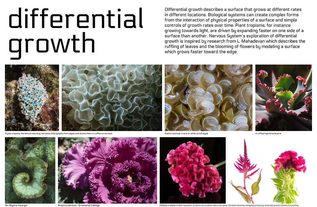 poster: differential growth 1