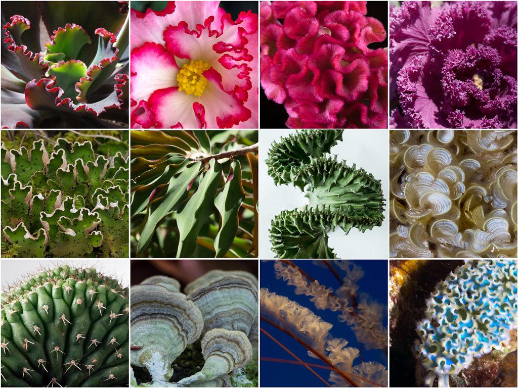 Floraform inspiration